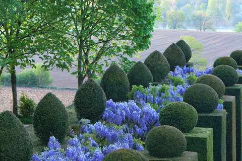 Topiary art in the Gardens of La Ballue, an ever changing spectacle