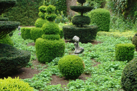 Topiary art and mannerism weekend may 27 28 news for Entretien jardin versailles