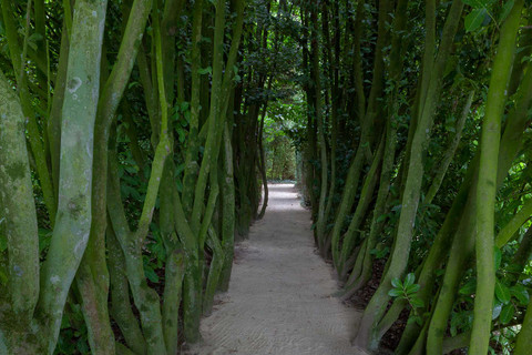 A tree lined pathway in the gardens of the Chateau de La ballue