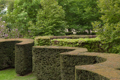 Topiary art on the hedges of the Chateau de La Ballue's gardens