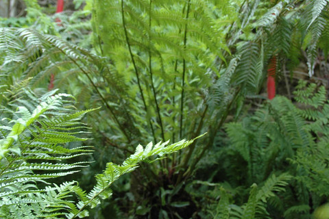 Ferns in the Chateau de La Ballue's gardens
